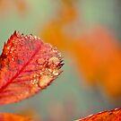 Colours of November V by Kathleen Daley