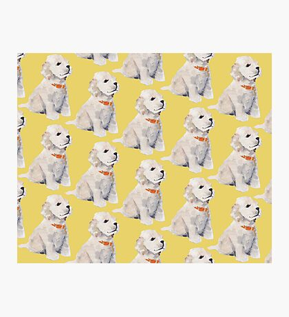 Puppies Photographic Print