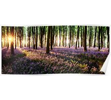 Long shadows in bluebell woods at sunrise Poster