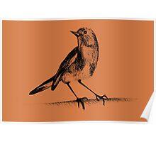 Drawing of hummingbird. Illustration Poster