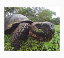 Galapagos tortoise Kids Tee