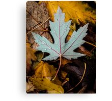 Autumn leaf Canvas Print