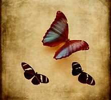 Vintage Inspired Butterflies and Moths by BrookeRyanPhoto