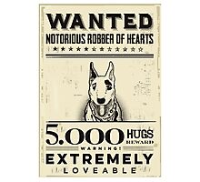 wanted  bull terrier Photographic Print