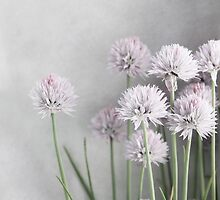 Lavender Flowers and Green Chives on Soft Gray by BrookeRyanPhoto