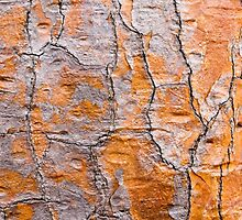 Cactus bark by Michael Stiso