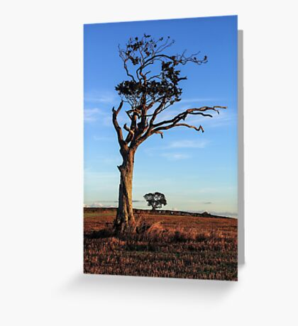 One Tree, Here and There Greeting Card
