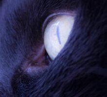 Black cat eye Sticker
