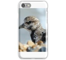 Turnstone iPhone Case/Skin