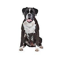 Funny boxer dog Photographic Print
