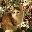 MoMo Waiting for Santa by Grinch/R. Pross
