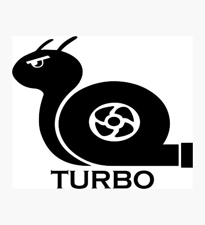 Turbo Snail Photographic Print