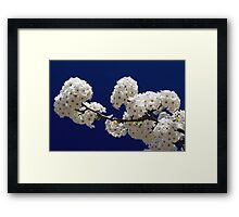 Blossoms In Blue Framed Print