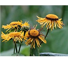 Nature's Bright Life Cycle Photographic Print