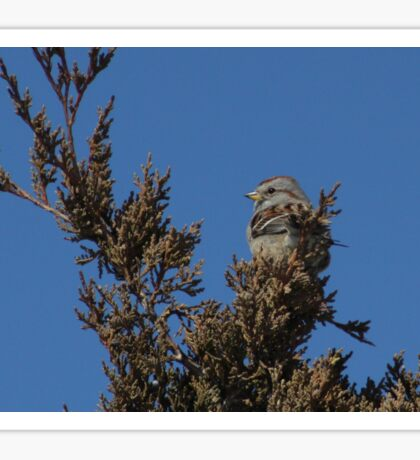 American Tree Sparrow Sticker