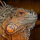Iguana by Martina Fagan
