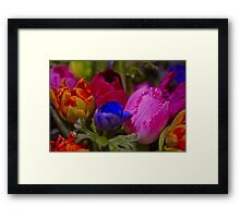 Vibrant colours Framed Print
