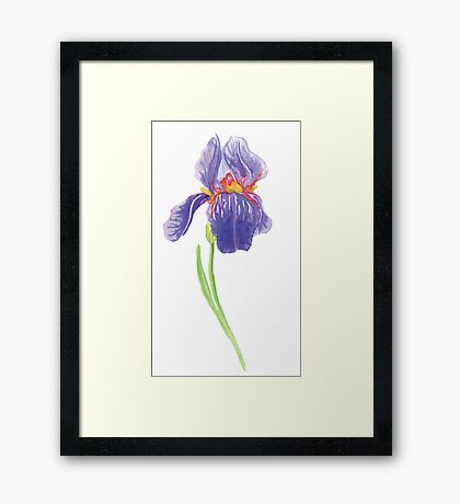 Iris water color painting Framed Print