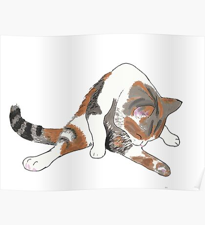 Calico Cat Bath Time Poster