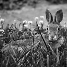Bunny! by Rebecca Bryson