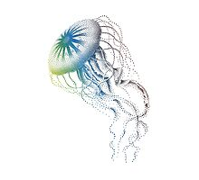 colorful jellyfish, sea life, drawing, illustration Photographic Print