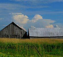 Farm Country by Janet Gosselin