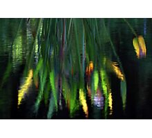 Reflection In The Pond Photographic Print