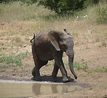 'I'm So Excited, I Just Can't Hide It.......' - Timbavati, South Africa by pennies4eles