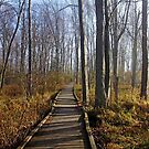 Fog Burn In Fall by Debbie Oppermann