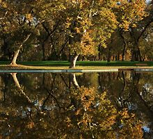 Bidwell Park Reflections by James Eddy