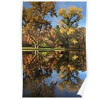 Sycamore Pool Reflections Poster