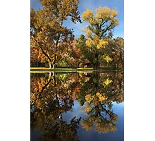 Sycamore Pool Reflections Photographic Print