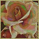 Textured Rose by Dana Roper