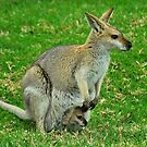 Cautious Joey by Penny Smith