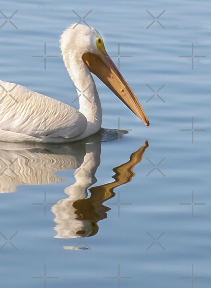 Pelican Abstract! by Heather Friedman