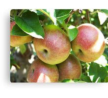 Apples On The Tree Canvas Print