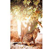 Beautiful tabby cat sitting under the tree Photographic Print