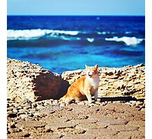 Coastline with ginger tabby roar cat Photographic Print