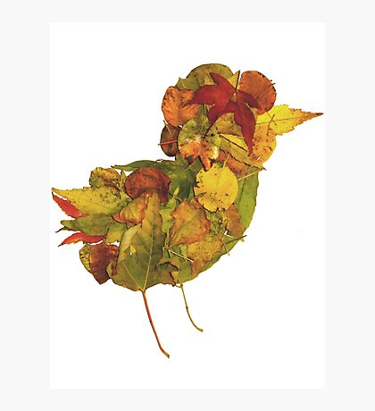 Little Bird of Fall Photographic Print
