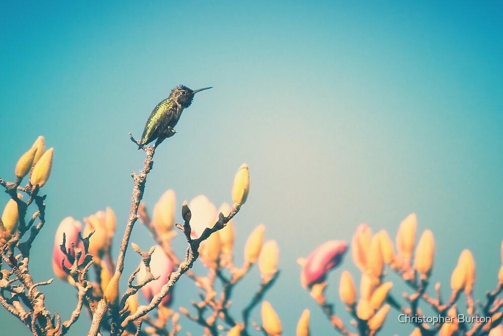 Hummingbird by Christopher Burton