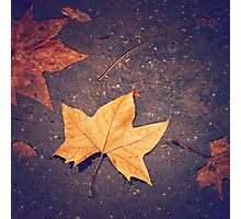 Autumn Background with Maple Leaf Photographic Print