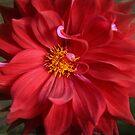 Luscious Red by Lynn Starner