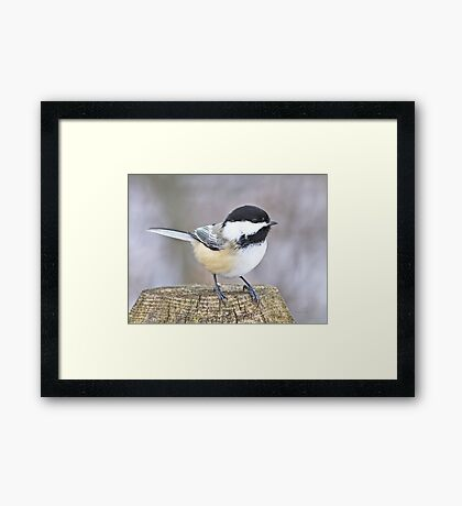 Chickadee on a used to be tree Framed Print