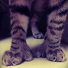 Big Kitten Paws by jodi payne