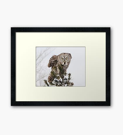 The perching prince Framed Print