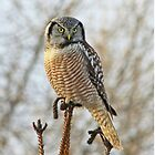 Precarious perch by Heather King