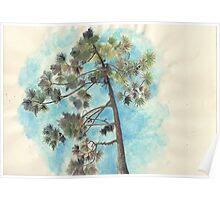 Pine Tree, Dune de Pyla Poster