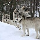 Wolves in Winter by Poete100