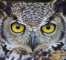 I'm watching you by Heather King
