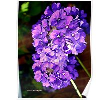 Cluster of Purple Flowers Poster